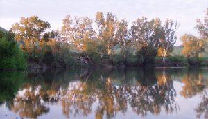 Murrumbidgee River - Mundarlo - Wagga Wagga